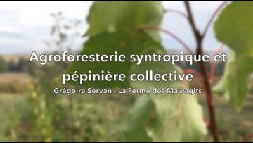 Agroforesterie syntropique et pépinière collective – la Ferme des Mawagits