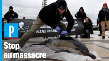 Des cadavres de dauphins au Trocadéro