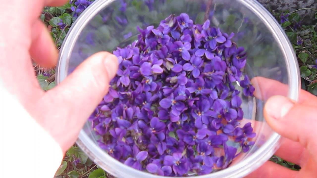 la-violette-et-ses-proprietes-me