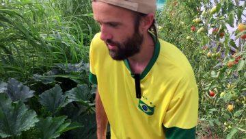 Maraîchage sur sol vivant en 4 exemples – Maxime Barbier, France