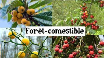 Fruitiers originaux et rustiques pour la forêt-comestible
