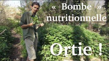 """Jus d'ortie, la """"bombe"""" nutritionnelle du printemps"""