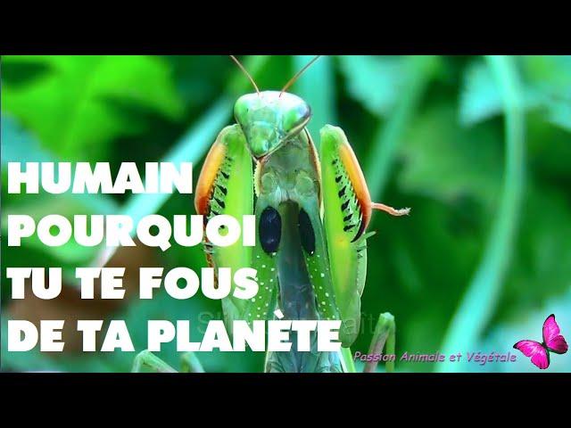 """Le message """"Humain, pourquoi tu ne respectes pas ta planète, ta maison ?"""""""