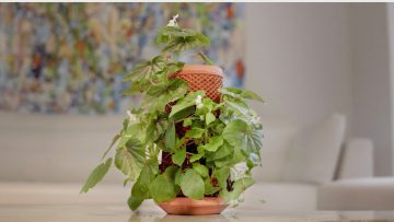 Terraplanter – the inside out planter