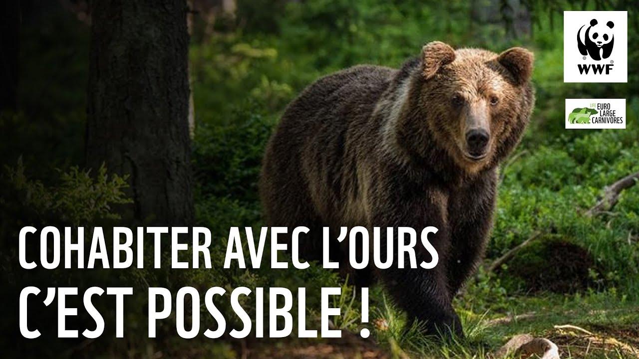 L'ours et l'Homme : la coexistence est possible