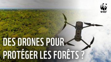 Incendies et déforestation : les drones au service des populations locales