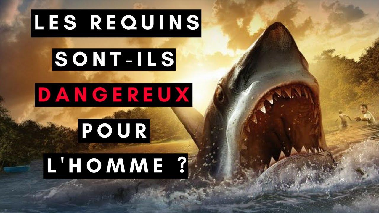 LES REQUINS SONT-ILS DANGEREUX POUR L'HOMME ?