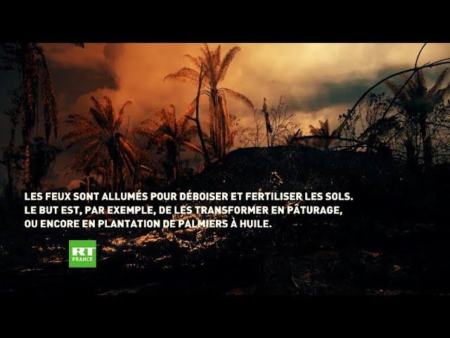 Plus forte hausse du nombre d'incendies en Amazonie depuis 2010