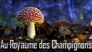 Au royaume des champignons
