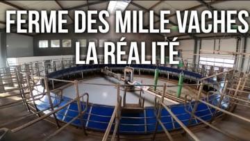 FERME DES MILLE VACHES, LA RÉALITÉ D'UNE FERME USINE
