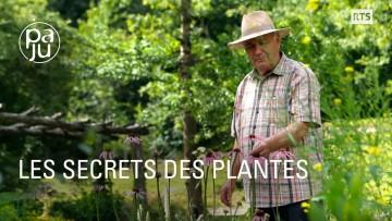 Le savoir d'un droguiste passionné de plantes médicinales