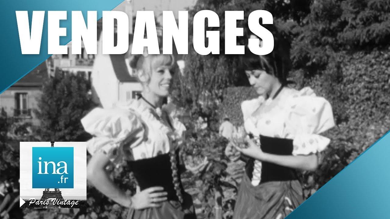 1969 : Les vendanges de Montmartre