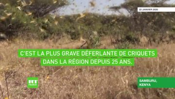 afrique-la-menace-criquets