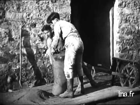 Apprentissage agricole en 1920