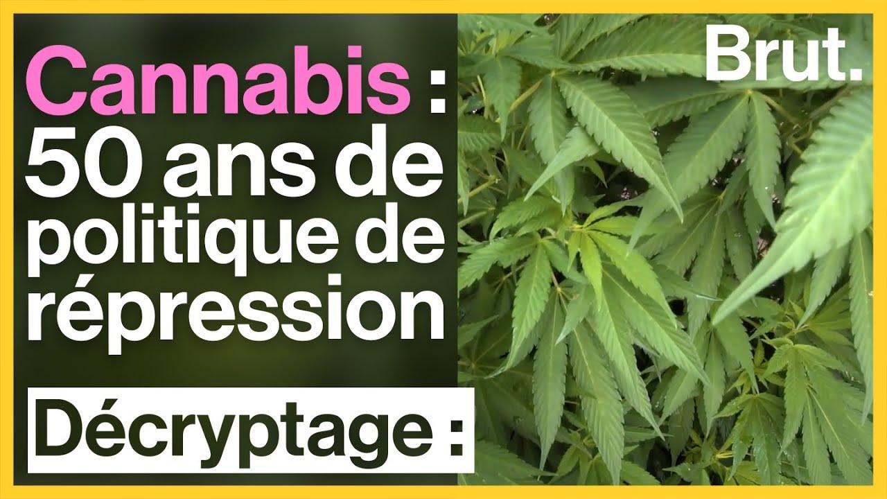Cannabis : 50 ans de politique de répression