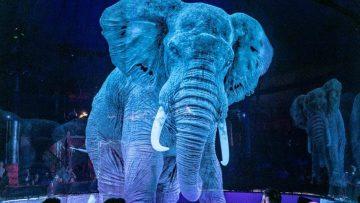 ce-cirque-remplace-les-animaux-p