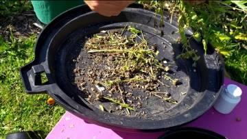 Fleurir pas cher: astuces pour des graines gratuites de plantes médicinales et méllifères: le Soucis
