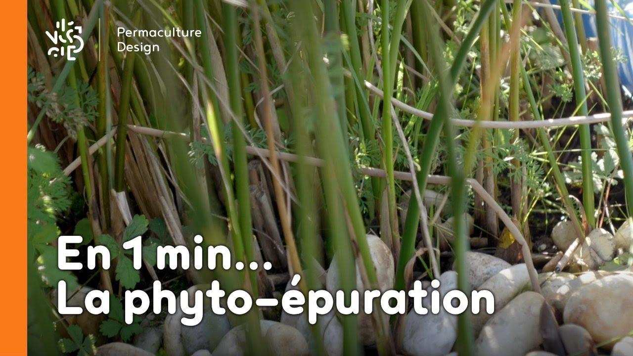 La minute permaculture : C'est quoi la phyto-épuration ?