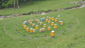 positionner-des-ruches-selon-les