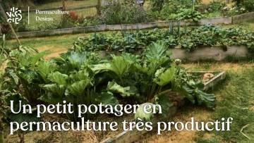 Permaculture au potager : 115 kg de légumes sur 50 m2 dans un jardin familial